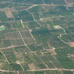Vista aérea de los parcelarios agrícolas (Foto ESTEPA).