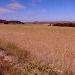 Castellar de Meca y vistas de los cultivos, Ayora (foto ESTEPA).