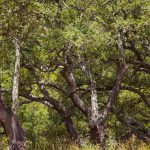 Alcornocales de la Serra d'Espadà