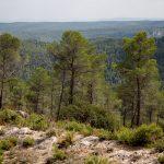 Bosque mediterráneo en el entorno del río Fraile. Bicorp (foto Adela Talavera).