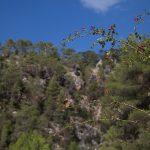 Formaciones vegetales del Macizo del Caroig (foto Adela Talavera).