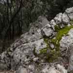 Bosque en el Penyagolosa (foto Adela Talavera).