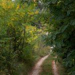 Camino de Benassal a la fuente (foto Adela Talavera).