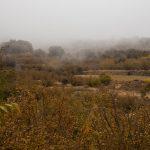 Vegetación en el entorno del Balneario (foto Adela Talavera).