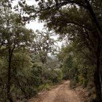 Camino forestal en la Gasulla (foto Adela Talavera).