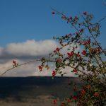 Vegetación en Ares del Maestrat (foto Adela Talavera).