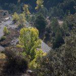 Vegetación en els Ports de Morella (foto Adela Talavera).