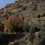 Cerca de Cinctorres (foto Adela Talavera).