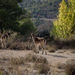 Fauna dels Ports de Morella (foto Adela Talavera).