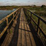 Pasarela para la visita del Parque Natural (foto Miguel Lorenzo).