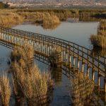 El Parque Natural del Fondó d'Elx (foto Miguel Lorenzo).