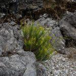 Vegetación en el Baranc de l'Infern (foto Miguel Lorenzo).