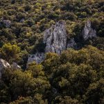 Laderas de la Sierra (foto Miguel Lorenzo).