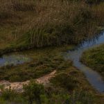 Canales de irrigación en la marjal de Pego-Oliva (foto Miguel Lorenzo).
