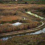 Canal de irrigación en la marjal de Pego-Oliva (foto Miguel Lorenzo).