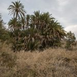 Vegetación en los alrededores del pantano d'Elx (foto Miguel Lorenzo).