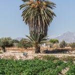Huertas en Mutxamel (foto Miguel Lorenzo).