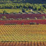 Ombria de Cals Frares (foto Miquel Francés).