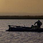 Pesca de la Llisa en l'Albufera (foto Miquel Francés).