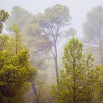 Bosque mediterráneo. Titaguas (foto Pep Pelechà).