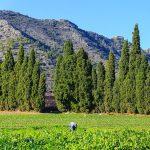 Vista del Puig (foto Miquel Francés).