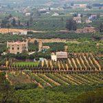 Los huertos de naranjos de Alzira y Carcaixent